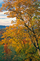 Chestnut oaks<br /> Blue Ridge Parkway and the Cherokee Indian Reservation<br /> Blue Ridge Mountains<br /> North Carolina