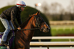 November 1, 2020: Channel Maker, trained by trainer William I. Mott, exercises in preparation for the Breeders' Cup Turf at Keeneland Racetrack in Lexington, Kentucky on November 1, 2020. Carolyn Simancik/Eclipse Sportswire/Breeders Cup