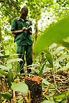 Anti-poaching snare removal team member, Godfrey Nyesiga, noting location of illegally cut wood, Kibale National Park, western Uganda