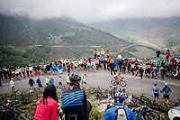 Daniel Navarro (ESP/Katusha - Alpecin) up the Alto de La Cubilla<br /> <br /> Stage 16: Pravia to Alto de La Cubilla. Lena (144km)<br /> La Vuelta 2019<br /> <br /> ©kramon