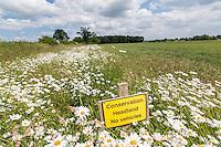 Six meter conservation headland - Norfolk, June