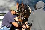 October 18, 2015:  Private Zone worked in prep for the Breeder's Cup Sprint at Keeneland, :11 1/5, :22 2/5, :34 3/5, 5f in :59, out in 1:13 3/5, for trainer Jorge Navarro and owner Good Friends Stable.  Candice Chavez/ESW/CSM