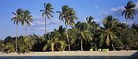 Iles Bahamas /Ile d'Andros/South Andros: la plage et les palmiers de l'Eco-Lodge-Tiamo Resorts