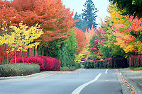 Wilsonville Rd. with fall color. Oregon.