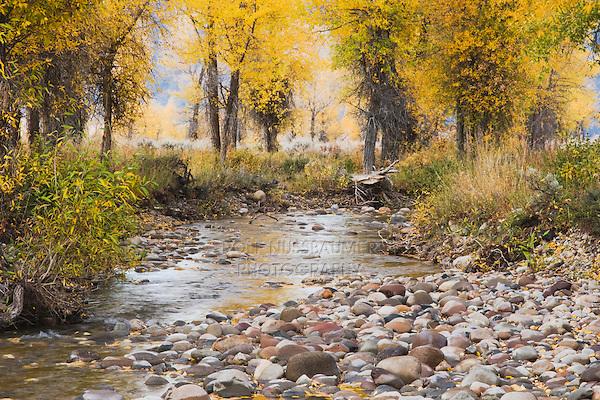 Tetons Reflecting in snake river, Schwabacher Landing, Grand Teton NP,Wyoming, USA
