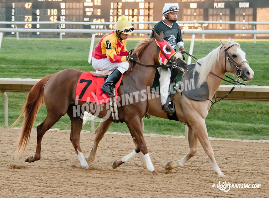 TM Reagan Bret before The Alec Courtelis Arabian Juvenile Stakes (gr 3)at Delaware Park on 9/14/13
