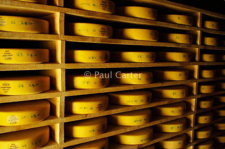 The large Alp cheeses and smaller Mutchlies maturing in the cheese house. They have to be turned daily...Cowherd and cheesemaker spends 100 days in the summer, high up in the mountains, tending cows and pigs and making cheese at Balisalp and Käserstatt near Meiringen, Switzerland.