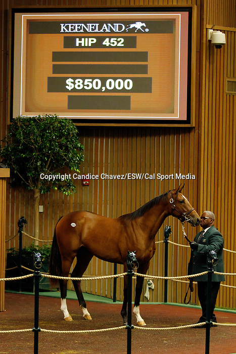 September 15, 2015: Hip 452 Bodemeister - Mining My Own filly consigned by Betz Thoroughbreds.   Candice Chavez/ESW/CSM