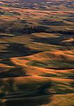 The warm light near sunset illuminates the hills of the Palouse in mid-July.