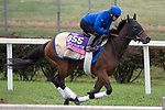 October 30, 2018 : Giant Expectations, trained by Peter A. Eurton, exercises in preparation for the Breeders' Cup Dirt Mile at Churchill Downs on October 30, 2018 in Louisville, Kentucky. Michael McInally/Eclipse Sportswire/CSM