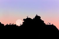 Full moon stting over rock at Bandon Beach with seagulls. Bandon, Oregon