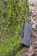An axe head, a protected artifact, near logging Camp 2 of the abandoned Sawyer River Railroad (1877-1928) in Livermore, New Hampshire. This axe head is a protected artifact, and the removal of historical artifacts from federal lands without a permit is a violation of federal law.