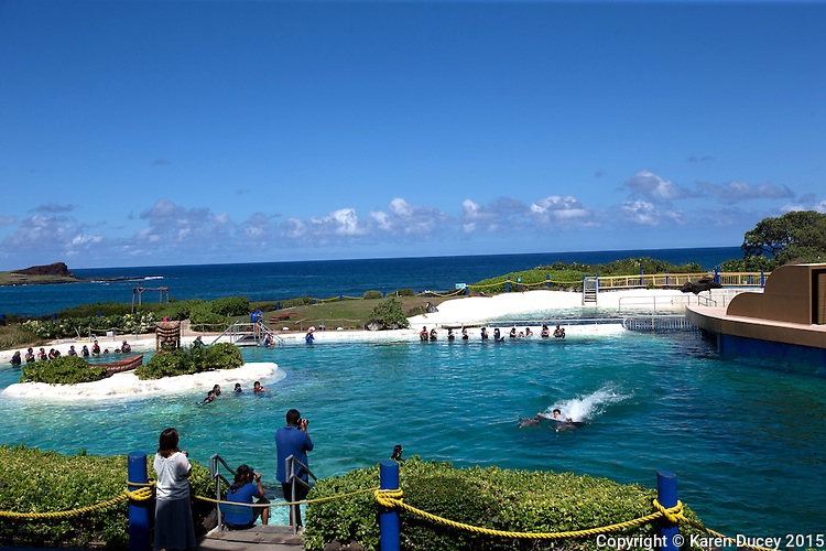 Patrons swim with dolphins at Sea Life Park in Waimanalo, HI. Just beyond their tanks is Waimanale Bay and the Pacific Ocean. (photo © Karen Ducey)