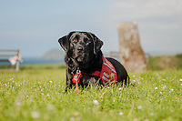 Saturday 28 June 2014<br /> Pictured: Aster the Dog <br /> Re: Elenor Clarks dog Aster can tell her when her blood sugar levels are low, saving her from diabetic hypoglycemic reaction