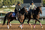 ARCADIA, CA  OCTOBER 30:  Breeders' Cup Turf Sprint entrant Stubbins, trained by Doug F. O'Neill, exercises in preparation for the Breeders' Cup World Championships at Santa Anita Park in Arcadia, California on October 30, 2019.  (Photo by Casey Phillips/Eclipse Sportswire/CSM)