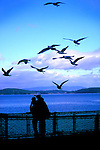 A couple hugs on the ferry to Orcas Island, San Juan Islands, Washington State.  Seagulls glide overhead.  Forested Orcas Island lies in the background.  Travel ideas at www.douglasortonimaging.com