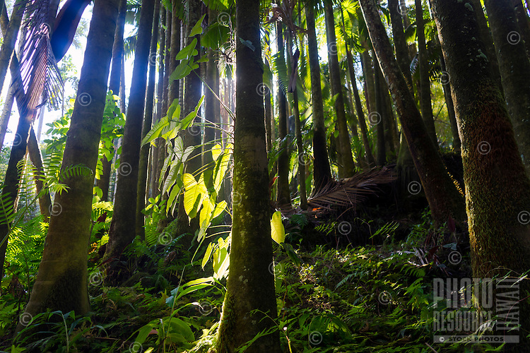 A peaceful moment in a rain forest, Island of Hawai'i.
