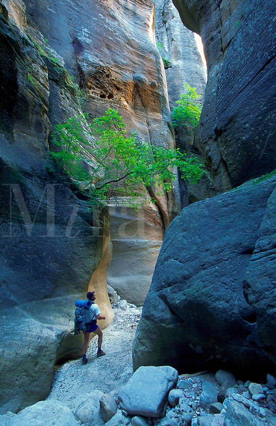 Backpacker hiking through  Orderville canyon