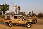African Lion (Panthera leo) biologists, Luke Hunter, Kim Young-Overton, Jake Overton, and park scout, Timbo Frackson, tracking collared lioness, Kafue National Park, Zambia