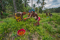 Agricultural Farmers, Mafinda, Sierra Leone, 2012<br /> This swampland is managed by a group of women in Mafinda. Each woman has her own plot of land, but they have learned the power of working together. Each one receives training, seeds, and fertilizers from the international NGO BRAC, and together they grow corn, peppers and tomatoes to sell in the market. In developing countries, 43 percent of agricultural workers are women, but they often lack rights to the land; have limited access to water, fertilizer, seeds, credit, and training; and spend more time on unpaid work than rural men or urban men and women do. It is estimated that if women farmers had access to the same resources as men, there could be 150 million fewer hungry people in the world.