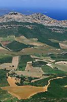 Europe/France/Corse/2B/Haute-Corse/Cap Corse/Nebbio/Patrimonio: Le vignoble