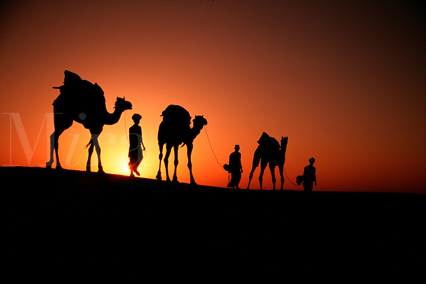 A camel caravan in silhouette at sunset on the Sam sand dunes. Rajasthan, India.