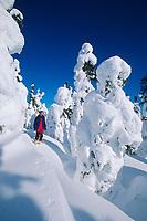 Snowshoeing amongst snow covered spruce trees, Interior, Alaska