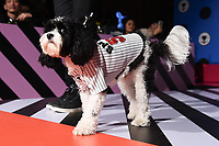 Dogs Parade<br /> on the 'Dogwalk' at the Sniffie AW17 fashion show, London<br /> <br /> <br /> ©Ash Knotek  D3306  13/09/2017