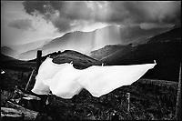 Europe/France/Auvergne/15/Cantal/Massif du Puy Mary : Linge de la laiterie séchant dans les pâturages - Parc Naturel Régional des Volcans d'Auvergne