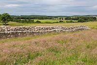 Cumbria, England, UK.  South Wall of the Birdoswald Fort, Hadrian's Wall Footpath.