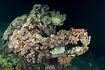 White Beach, Russell Islands, Solomon Islands; a forklift from WWII, encrusted with corals, sponges and algae, resting on the sea floor at night