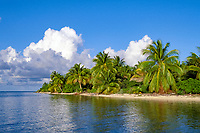 beach and coconut palm trees, Northern Two Cayes, Lighthouse Reef Atoll, Belize, Central America (Caribbean)