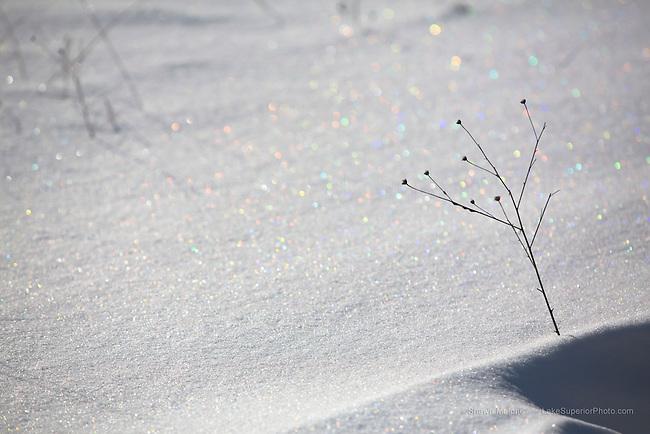 snowflake, snow crystal, rainbow, bokeh