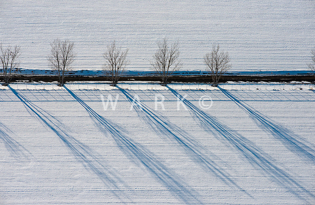 Farm fields and tree shadows. Feb 2014. Pueblo County, Colorado. 89784