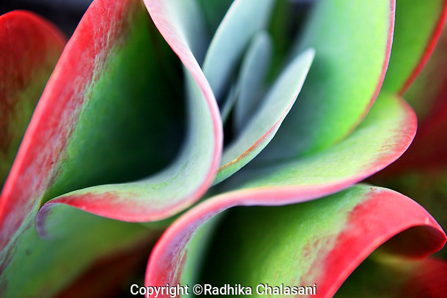 MANHATTAN BEACH, CA: Plants ©Radhika Chalasani