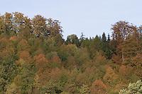 Wald, Laubwald im Herbst, Mischwald