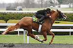 April 03, 2014: Hip 90 Tapit - Cloudburst consigned by Wavertree Stables worked 1/8 in 10:1 .  Candice Chavez/ESW/CSM