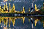 Reflections of alpine firs in lake, Mt. Rainier National Park, Cascade Range, Washington, USA