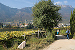 Italy, South tyrol (Alto Adige) Caldaro at the South Tyrolean Wine Route, hiking trail through vineyards