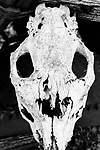 Skeletons of Animals