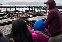 """Robben und Seehunde am """"Pier 39"""" in San Francisco.<br /> 29.5.2017, San Francisco<br /> Copyright: Christian-Ditsch.de<br /> [Inhaltsveraendernde Manipulation des Fotos nur nach ausdruecklicher Genehmigung des Fotografen. Vereinbarungen ueber Abtretung von Persoenlichkeitsrechten/Model Release der abgebildeten Person/Personen liegen nicht vor. NO MODEL RELEASE! Nur fuer Redaktionelle Zwecke. Don't publish without copyright Christian-Ditsch.de, Veroeffentlichung nur mit Fotografennennung, sowie gegen Honorar, MwSt. und Beleg. Konto: I N G - D i B a, IBAN DE58500105175400192269, BIC INGDDEFFXXX, Kontakt: post@christian-ditsch.de<br /> Bei der Bearbeitung der Dateiinformationen darf die Urheberkennzeichnung in den EXIF- und  IPTC-Daten nicht entfernt werden, diese sind in digitalen Medien nach §95c UrhG rechtlich geschuetzt. Der Urhebervermerk wird gemaess §13 UrhG verlangt.]"""