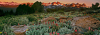 920000017 panoramic view sunrise lights up the minarets in the eastern sierras and wild growing lemmons paintbrush castilleja lemmonnii from the minarets vista in mono county california