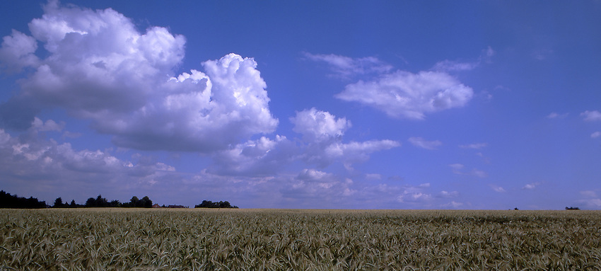 Europe, DEU, Deutschland, North Rhine Westphalia, Rhineland, Lower Rhine, Dinslaken, Formation of clouds, Cumulus, Grainfield, Summer....[ For each utilisation of my images my General Terms and Conditions are mandatory. Usage only against use message and proof. Download of my General Terms and Conditions under http://www.image-box.com or ask for sending. A clearance before usage is necessary...Material is subject to royalties. Each utilisation of my images is subject to a fee in accordance to the present valid MFM-List...Contact | archive@image-box.com | www.image-box.com ]