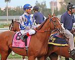 Scenes from Gulfsteam Park.  Lea (KY) with jockey Joel Rosario on board wins the Donn Handicap G1 at Gulfstream Park.  Hallandale Beach, Florida 02-09-2014