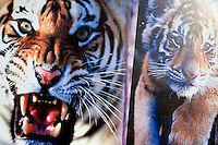 Photographs of tigers decorate the entrance road to the Siberian Tiger Park in Haerbin, Heilongjiang, China.  The Siberian Tiger Park is described as a preserve to protect Siberian tigers from extinction through captive breeding.  Visitors to the park can purchase live chickens and other meat to throw to the tigers.  The Siberian tiger is also known as the Manchurian tiger.