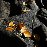 Golden leaves glow against a backdrop of black sand along Eagle River, near Anchorage, Alaska.