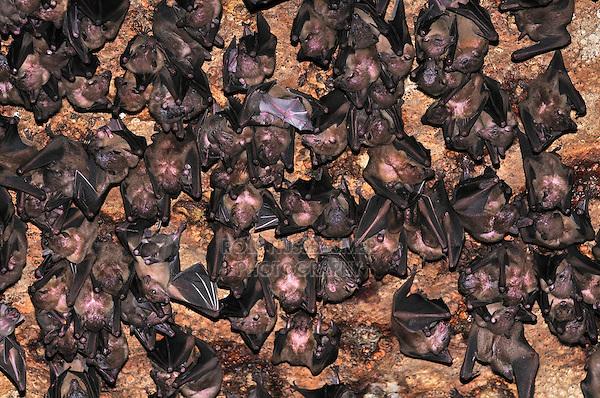 Bats inside Ankarana Cave, Ankarana National Park, Nosy Be, Madagascar