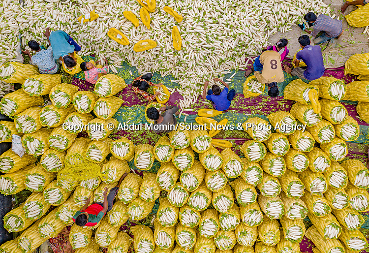 Pictured: The white radishes<br /> <br /> Aerial shots show millions of cauliflowers and white radishes arranged at a market.  The market covers an area of around 2km, where the vegetables are sold and packed into jute sacks ready for transportation.<br /> <br /> The produce is grown all over northern Bangladesh, and the pictures were taken in Shibganj, in the Upazila district of the country.  SEE OUR COPY FOR DETAILS.<br /> <br /> Please byline: Abdul Momin/Solent News<br /> <br /> © Abdul Momin/Solent News & Photo Agency<br /> UK +44 (0) 2380 458800