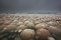SUSAN TUSA\Photography<br /> <br /> Ice balls along the shores of Lake Michigan
