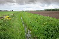 Field drain in spring - Lincolnshire, April